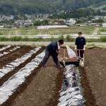 農業活動、途中経過。
